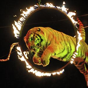 Цирки Известкового