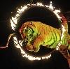 Цирки в Известковом