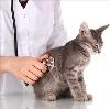 Ветеринарные клиники в Известковом